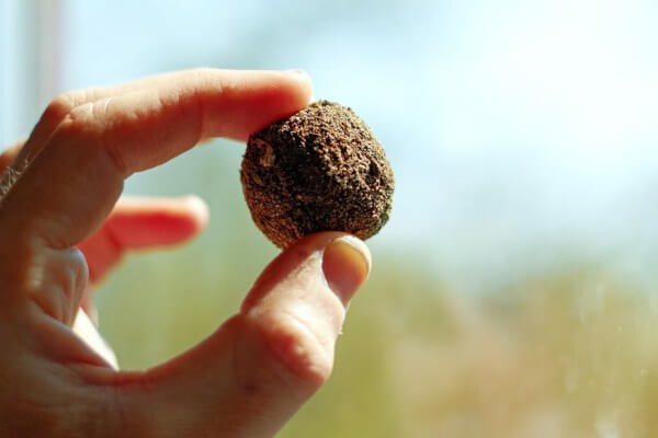 Riforestazione: Seed Bombing